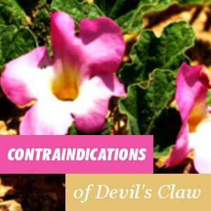 Contraindications of the Harpagophytum