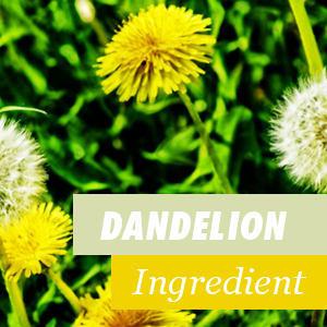 Dandelion Ingredient