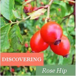 Discovering Rose Hip