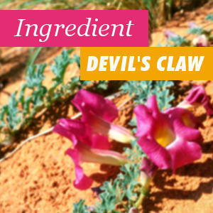 The devil's claw ingredient