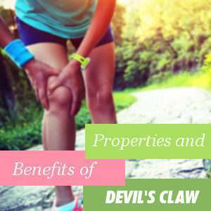 Properties and benefits of the Devil's Claw