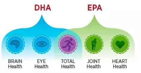 Fonctions de l'EPA et du DHA dans notre santé