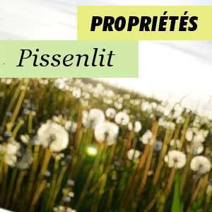 Propriétés du Pissenlit