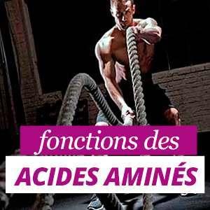 Que sont les acides aminés