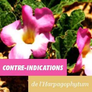Harpagophyton, contre-indications