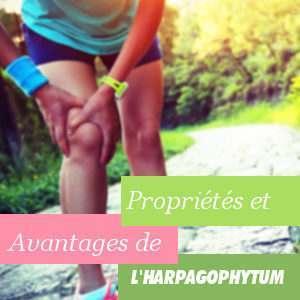 Propriétés de l'harpagophytum