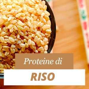 Tutto sulla proteina di riso