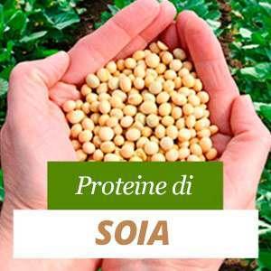 Tutto sulle proteine della soia