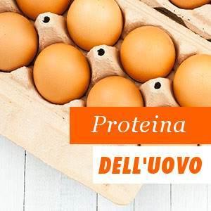Benefici Proteina dell'uovo