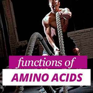 All about Amino-acids