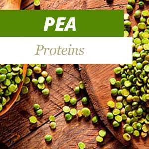 Everything about Pea Protein