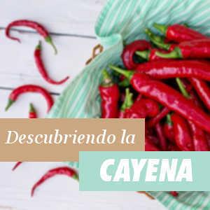 Todo lo que debes saber sobre la Cayena