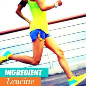 Leucine and sport