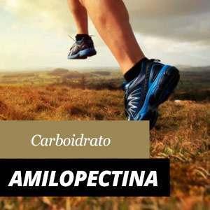 Tutto sull'Amilopectina