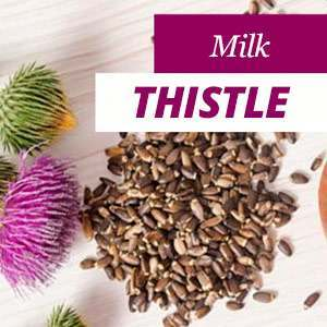 Everything about Milk Thistle