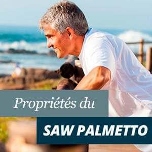Tout à propos de Saw Palmeto