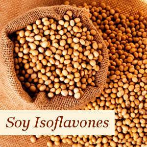 Ingredient Soy Isoflavones