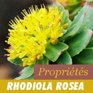 Propriétés de la Rhodiola