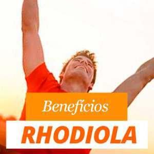 Tudo sobre a Rhodiola